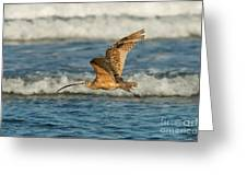 Long-billed Curlew Flying Over The Surf Greeting Card