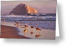 Long Billed Curlew - Morro Rock Greeting Card