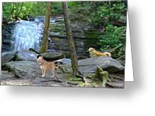 Long Creek Falls Greeting Card by Bob Jackson