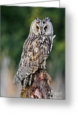 Long-eared Owl 4 Greeting Card