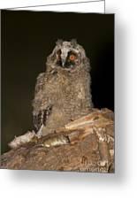 Long-eared Owl Asio Otus Greeting Card