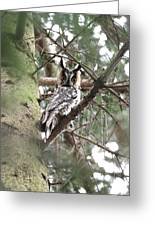 Long Eared Owl At Attention Greeting Card