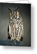 Long-eared Owl Greeting Card
