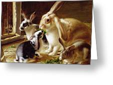 Long-eared Rabbits In A Cage Watched By A Cat Greeting Card by Horatio Henry Couldery