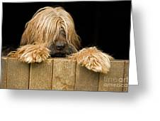 Long-haired Dog Greeting Card