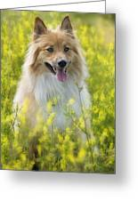 Long Haired Mixed Breed Greeting Card