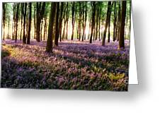 Long Shadows In Bluebell Woods Greeting Card