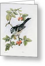 Long Tailed Tit And Rosehips Greeting Card