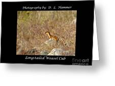 Long-tailed Weasel Cub Greeting Card