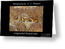Long-tailed Weasel Cubs Greeting Card