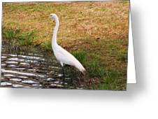 Long White Strides Greeting Card