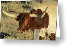 Longhorn # 2 Greeting Card