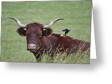 Longhorn And Friend Greeting Card
