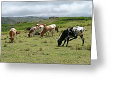 Longhorn Cattle Greeting Card