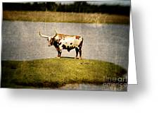 Longhorn Greeting Card