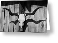 Longhorn Steer Skull Greeting Card