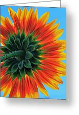Longing For Summer Greeting Card