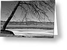 Longs Peak Geese Bw Greeting Card