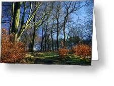 Longshaw Woods Greeting Card