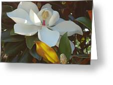 Longue Vue Magnolia Greeting Card