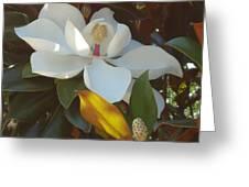 Longue Vue Magnolia Greeting Card