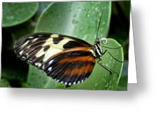 Longwing Butterfly Greeting Card