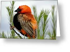 Lonley Bird Greeting Card