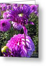 Look At Me Dahlia Flower Greeting Card