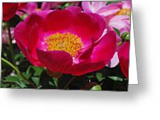 Look Into My Center Greeting Card by Billie Colson