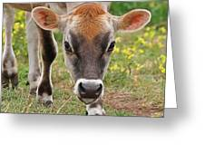 Look Into My Eyes - Jersey Cow - Square Greeting Card