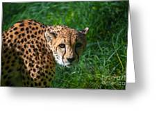 Look Of The Hunter Greeting Card