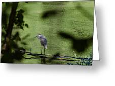 Look Through The Trees Greeting Card