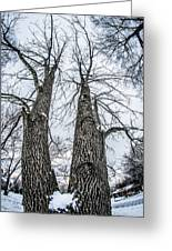 Looking At Tree Tops After A Winter Snow Storm Greeting Card