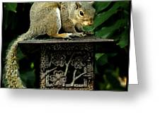 Looking For Nuts Greeting Card