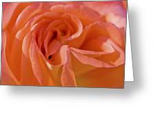 Looking Good Rose Greeting Card