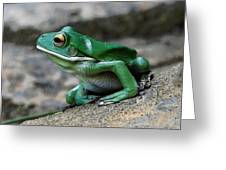 Looking Green Greeting Card