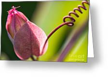 Looking Into A Pink Bud Greeting Card