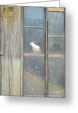 Looking Out The Coop Greeting Card