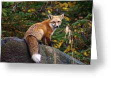 Looking Pretty Foxy Greeting Card