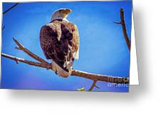 Looking Right Greeting Card by Bob Hislop