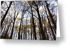 Looking Skyward Into Autumn Trees Greeting Card