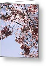 Looking Through Cherry Blossoms Greeting Card