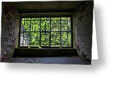 Looking Through Old Basement Window On To Vibrant Green Foliage Fine Art Photography Print  Greeting Card