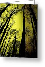 Looking Through The Naked Trees  Greeting Card