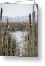 Looking Through The Reeds Greeting Card