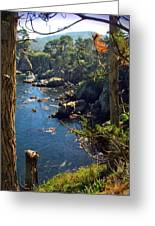 Looking Through The Trees At Point Lobos Greeting Card
