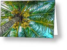 Looking Up A Coconut Tree Greeting Card