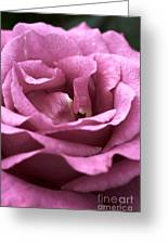 Looking Up - Dusty Rose Greeting Card