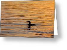 Loon At Sunset 6958 Greeting Card