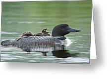 Loon Chick - Big Yawn Greeting Card